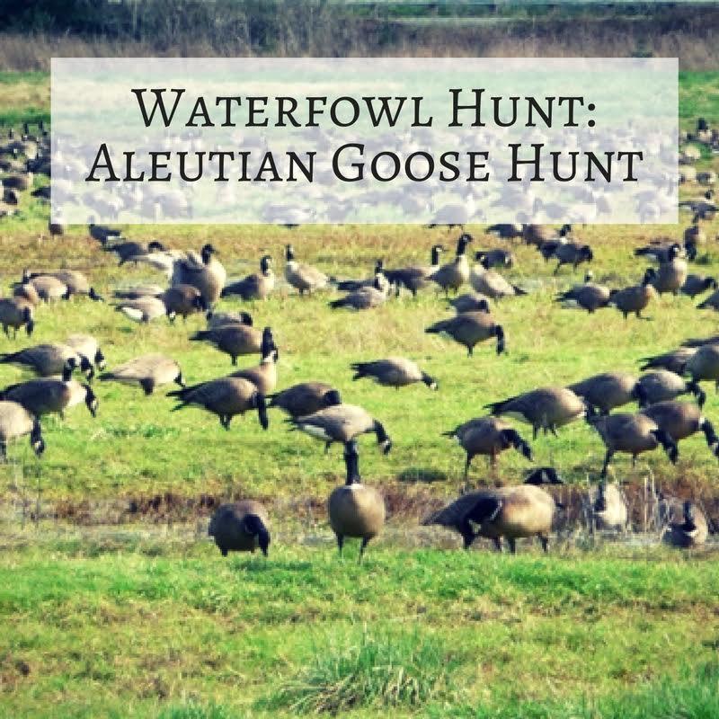 Adventure: Aleutian Goose Waterfowl Hunt (1 Day)