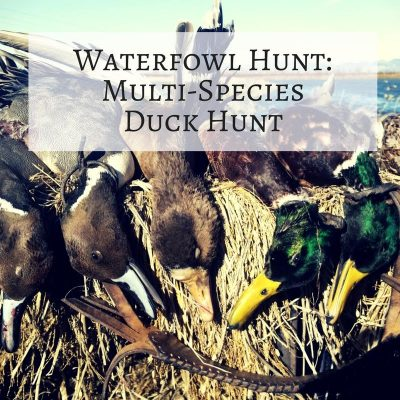 Adventure: General Waterfowl Guided Hunt