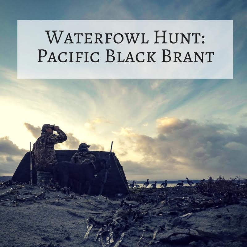 Adventure: Pacific Black Brant Waterfowl Hunt (1 Day)