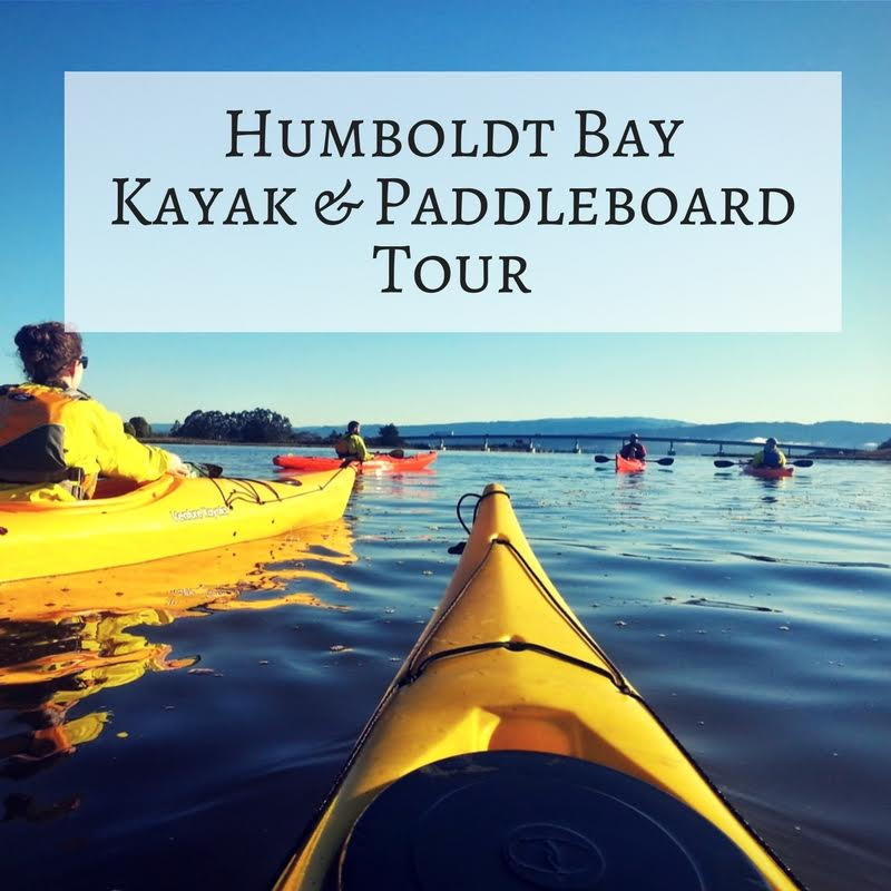 Tour: Humboldt Bay – Kayak/SUP (3 Hours)