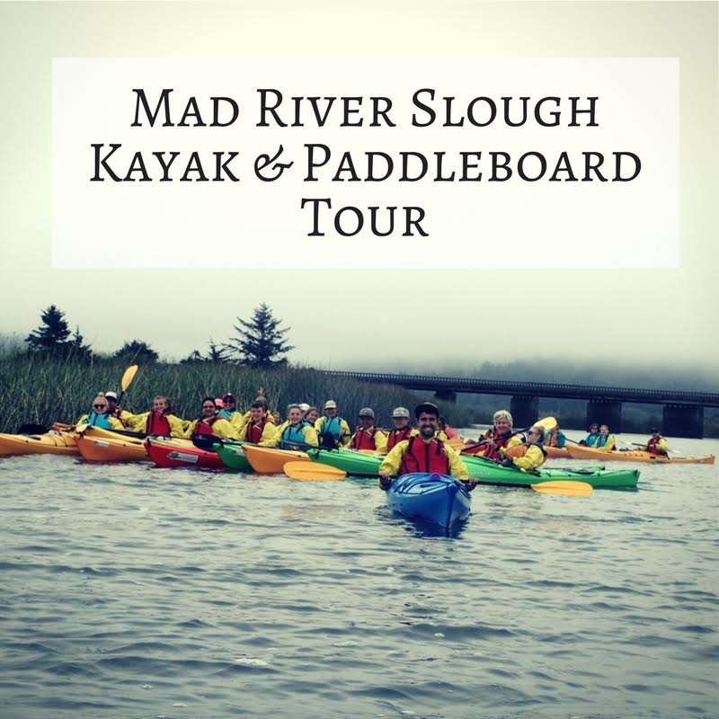 Tour: Mad River Slough Birding Tour – Kayak/SUP (3 Hours)