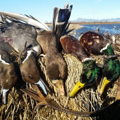 Mixed-Bag Duck Hunt - Pacific Outfitters